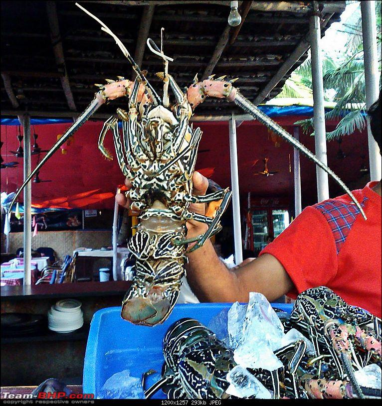 An incredible road trip to the �Pearl of the Orient� � Goa-4-huge_lobster.jpg