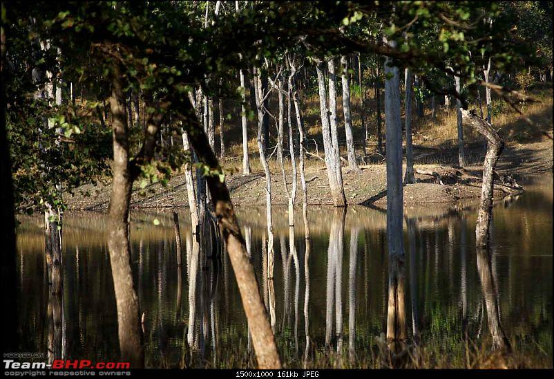 Magnificent Pench !-img_3339.jpg