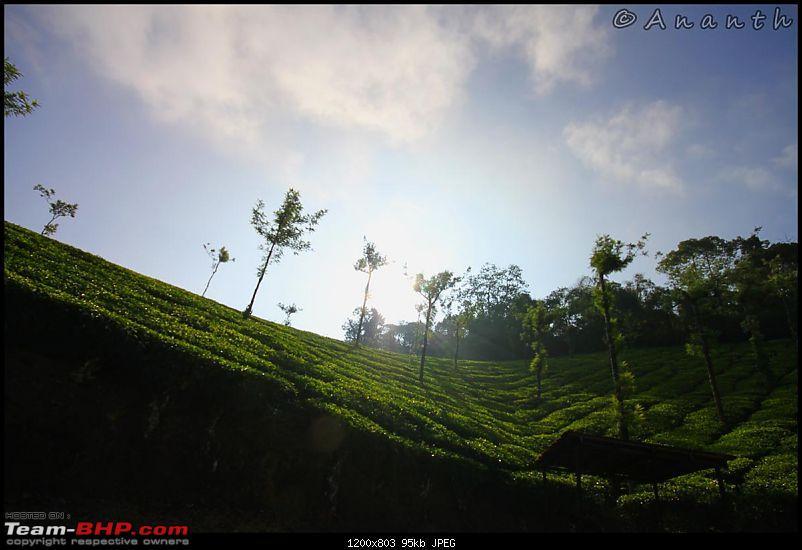 The South Western Drive : Valparai - Nelliampathi - Parambikulam - Kodai-img_0519.jpg