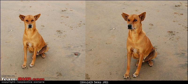"An incredible road trip to the ""Pearl of the Orient"" – Goa-21-attentive_doggy.jpg"