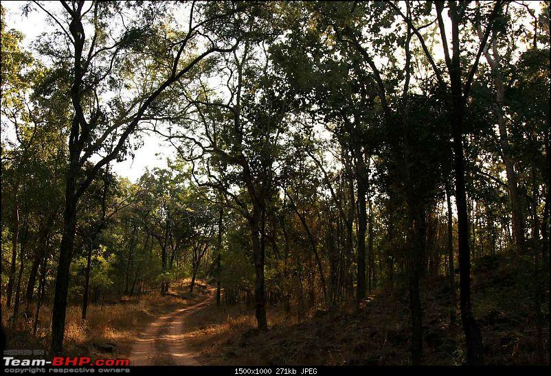 Magnificent Pench !-img_0247.jpg