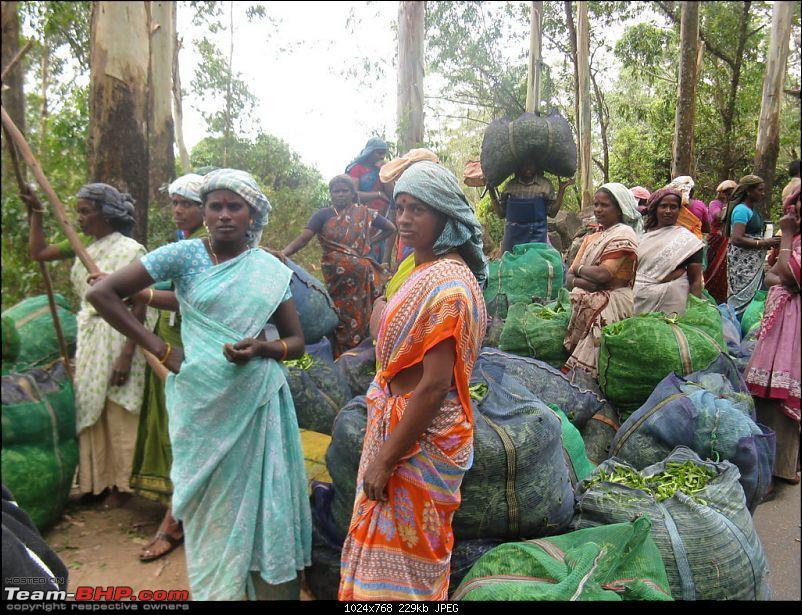 Chennai - Madurai - Alagar Kovil - Munnar - Thanjavur - Chennai-picture-741-fileminimizer.jpg