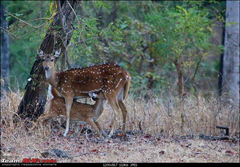 Magnificent Pench !-img_2935.jpg