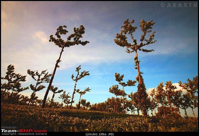 The South Western Drive : Valparai - Nelliampathi - Parambikulam - Kodai-img_0922.jpg