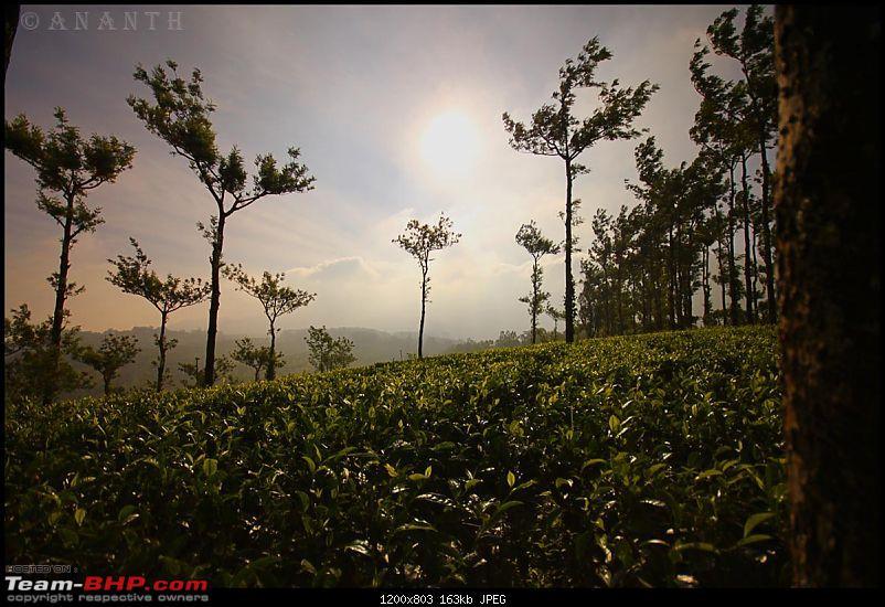 The South Western Drive : Valparai - Nelliampathi - Parambikulam - Kodai-img_0963.jpg