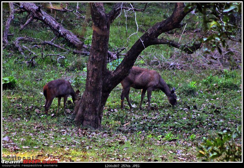 The South Western Drive : Valparai - Nelliampathi - Parambikulam - Kodai-img_1170.jpg