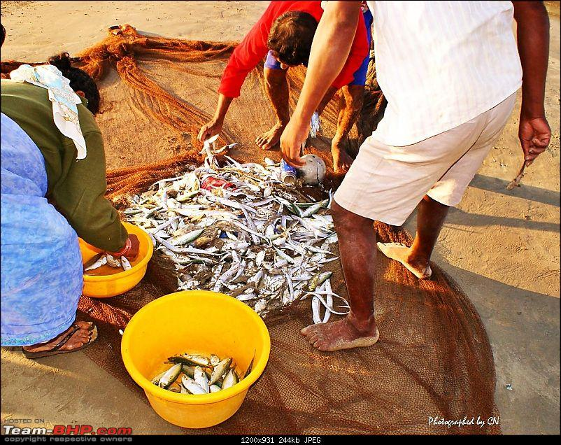 "An incredible road trip to the ""Pearl of the Orient"" – Goa-19-sorting_the_fish.jpg"