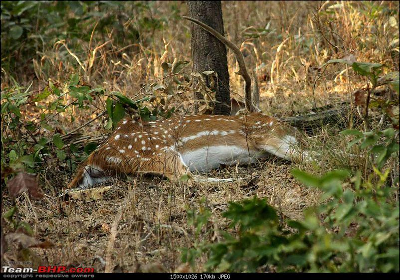 Magnificent Pench !-img_2019.jpg