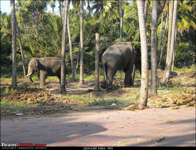 Guruvayoor and Alleppey Trip � A Newbie Travelogue-dscn0374.jpg
