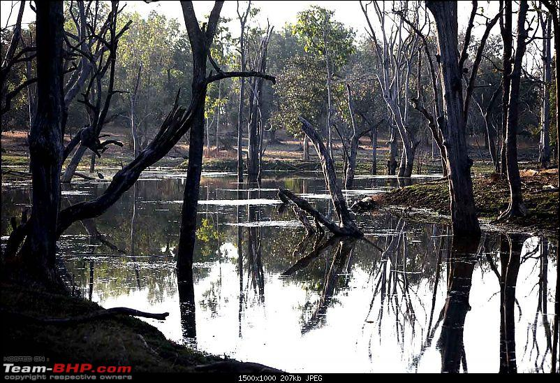 Magnificent Pench !-img_3586.jpg