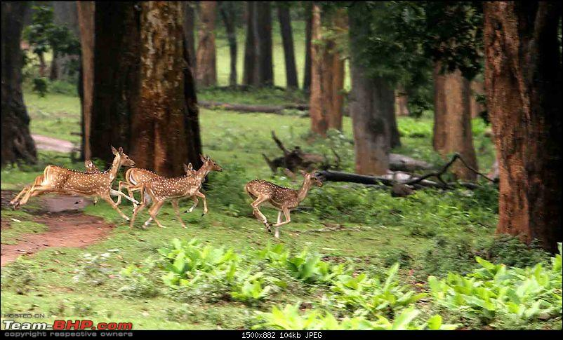 Magnificent Pench !-img_3072.jpg