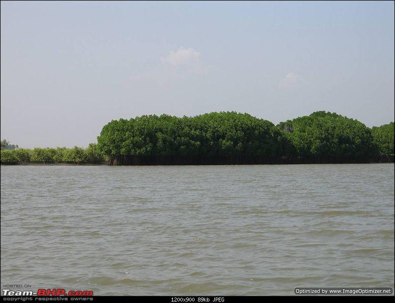 New Year 2011 - Chennai - Pondy - Pichavaram - Pondy - Chennai-ny11-065.jpg