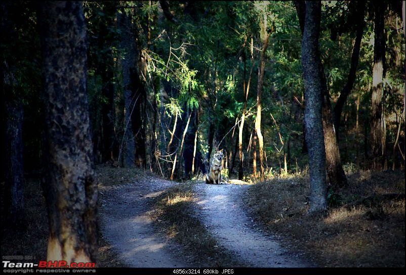 Magnificent Pench !-img_2840.jpg