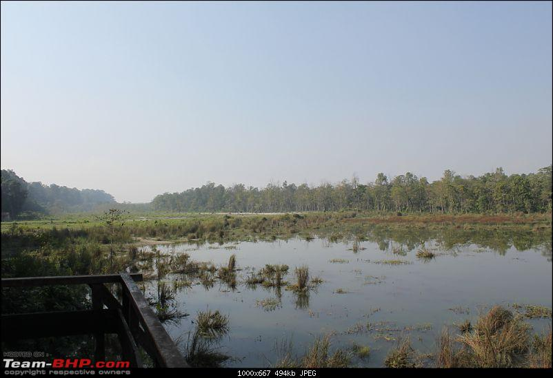 In search of Indian One-horned Rhinos-img_0847.mod.jpg