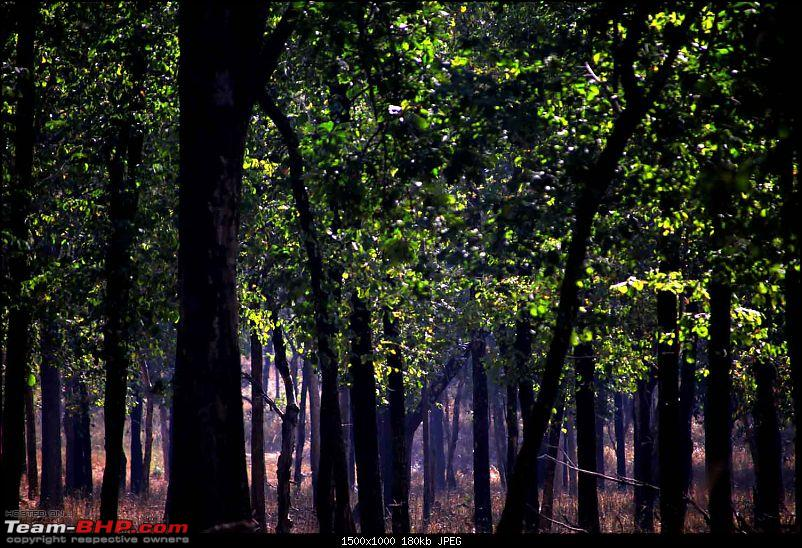 Magnificent Pench !-img_3409.jpg