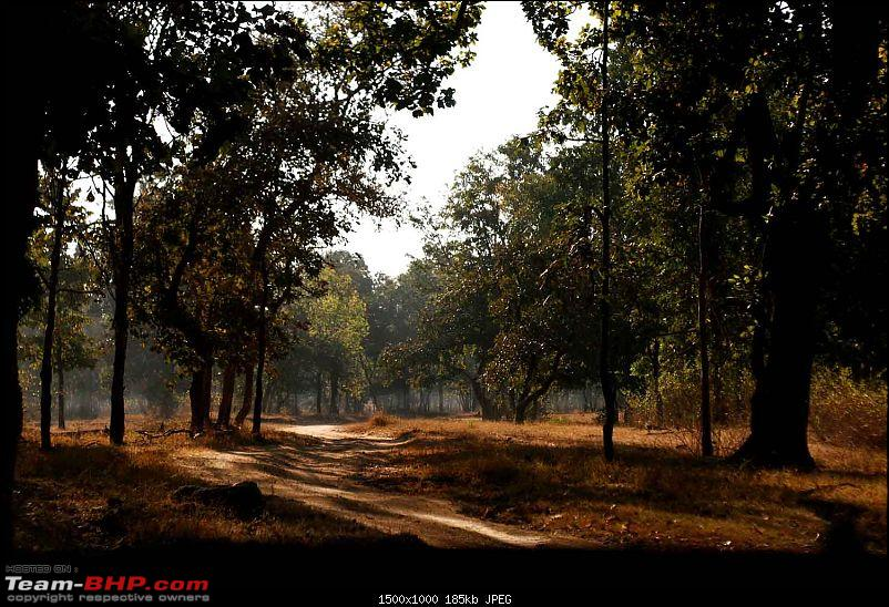 Magnificent Pench !-img_0317.jpg