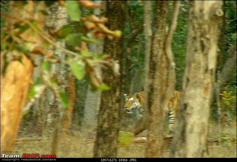 Pench Tiger Reserve - New season starts with a Bang !!!-dscn4524.jpg