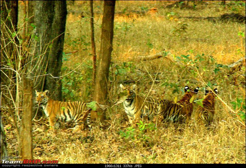 Pench Tiger Reserve - New season starts with a Bang !!!-dscn4554.jpg