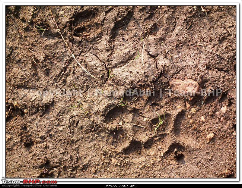 Pench Tiger Reserve - New season starts with a Bang !!!-54.jpg