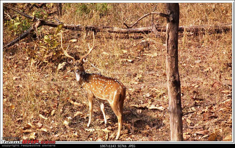 For how long we will be able to see Pench...?-50.jpg