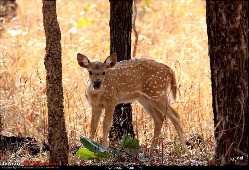 Pench Tiger Reserve - New season starts with a Bang !!!-img_0073.jpg