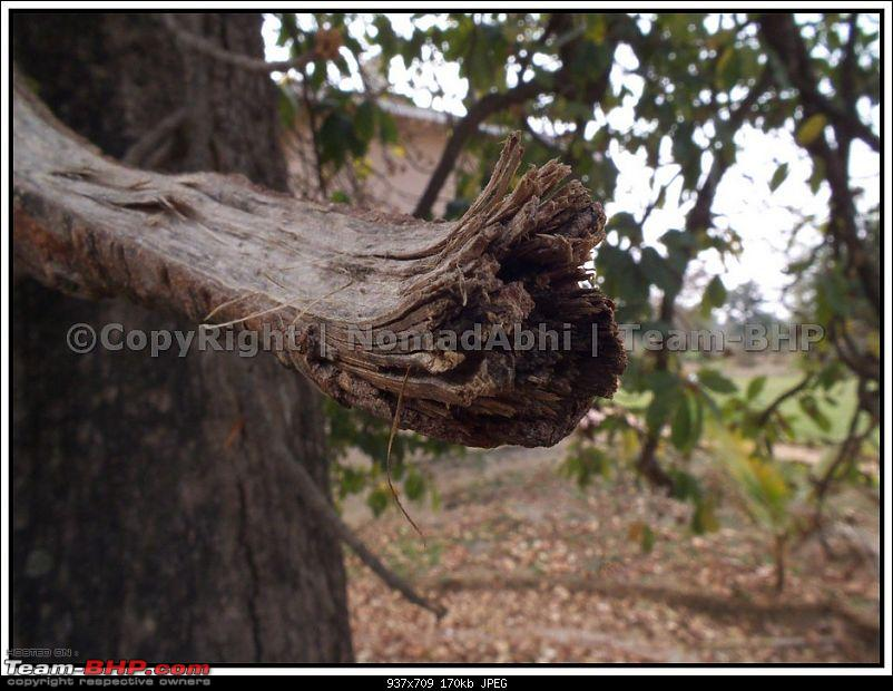 For how long we will be able to see Pench...?-09.jpg