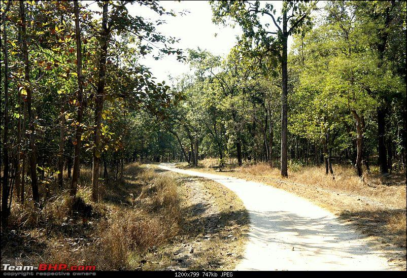 "Reflections on Wildlife Addictions ""Pench and Kanha National Park""-3.jpg"