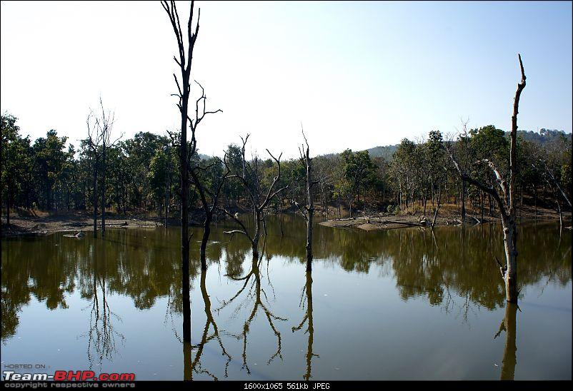 "Reflections on Wildlife Addictions ""Pench and Kanha National Park""-10.jpg"