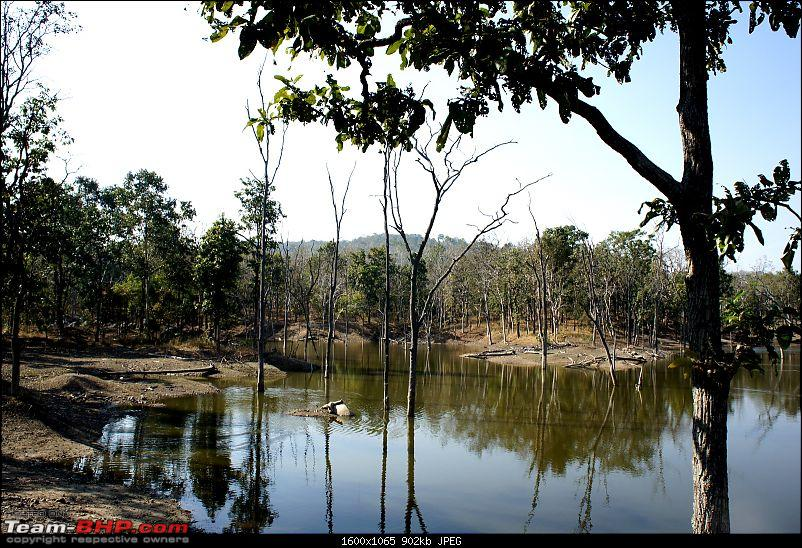 "Reflections on Wildlife Addictions ""Pench and Kanha National Park""-11.jpg"