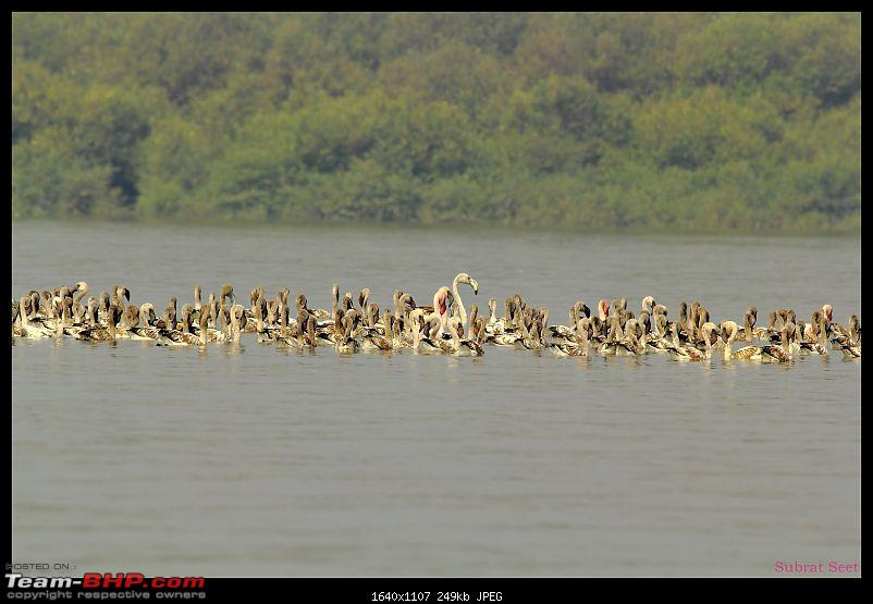 Flamingoes - Flame Birds of Airoli, Navi Mumbai-flamingo-28-1600x1200.jpg