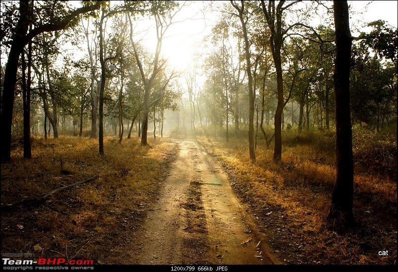 """Reflections on Wildlife Addictions """"Pench and Kanha National Park""""-76.jpg"""