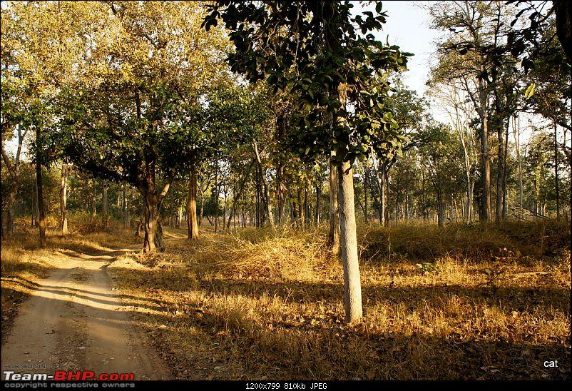 """Reflections on Wildlife Addictions """"Pench and Kanha National Park""""-78.jpg"""