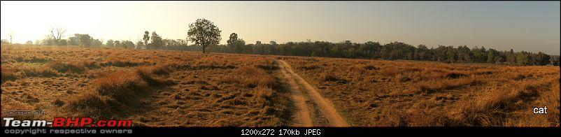 """Reflections on Wildlife Addictions """"Pench and Kanha National Park""""-79.jpg"""
