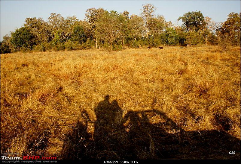 "Reflections on Wildlife Addictions ""Pench and Kanha National Park""-81.jpg"