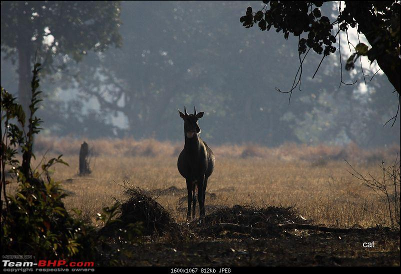 "Reflections on Wildlife Addictions ""Pench and Kanha National Park""-90.jpg"
