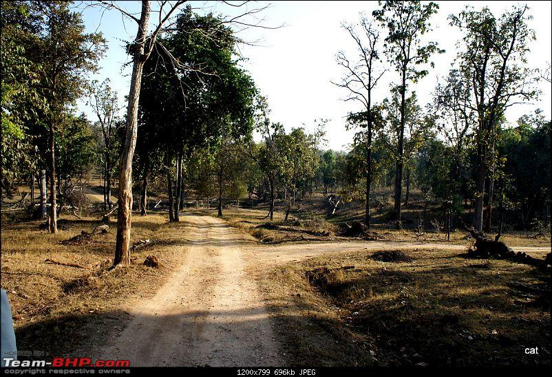 """Reflections on Wildlife Addictions """"Pench and Kanha National Park""""-92.jpg"""