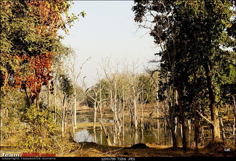"""Reflections on Wildlife Addictions """"Pench and Kanha National Park""""-93.jpg"""