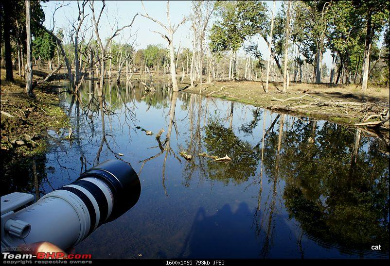 """Reflections on Wildlife Addictions """"Pench and Kanha National Park""""-94.jpg"""
