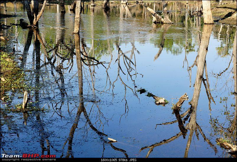 """Reflections on Wildlife Addictions """"Pench and Kanha National Park""""-96.jpg"""