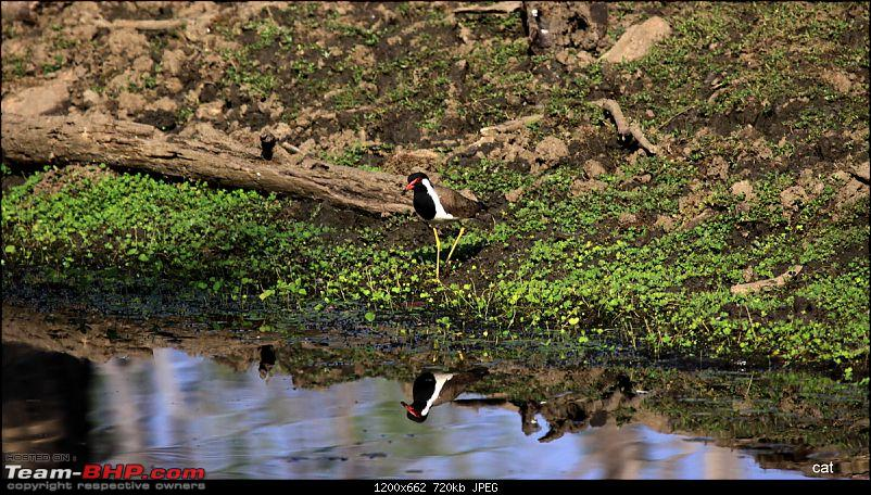 "Reflections on Wildlife Addictions ""Pench and Kanha National Park""-97.jpg"