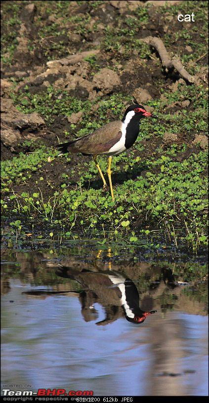 """Reflections on Wildlife Addictions """"Pench and Kanha National Park""""-99.jpg"""