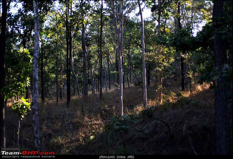 Magnificent Pench !-img_2434.jpg