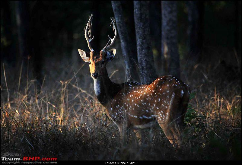 Magnificent Pench !-img_2210.jpg