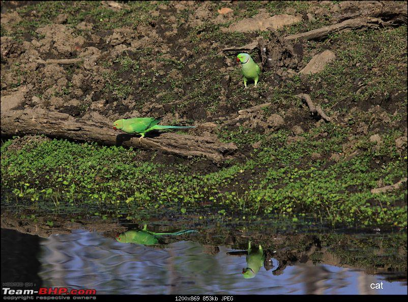 """Reflections on Wildlife Addictions """"Pench and Kanha National Park""""-111.jpg"""
