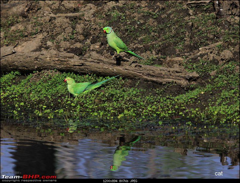 """Reflections on Wildlife Addictions """"Pench and Kanha National Park""""-113.jpg"""