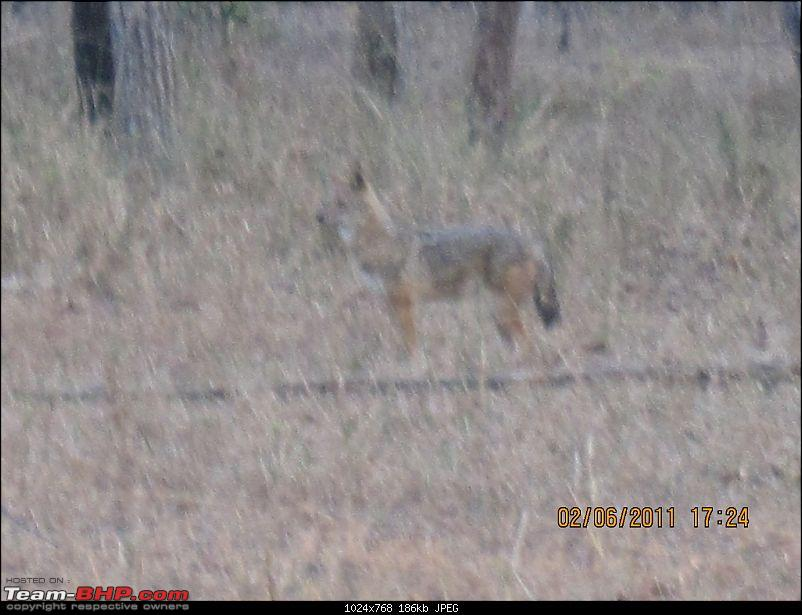 'Getz'ing away: Hyderabad - Nagpur - Kanha - Pench-29.blurred-view-fox.jpg