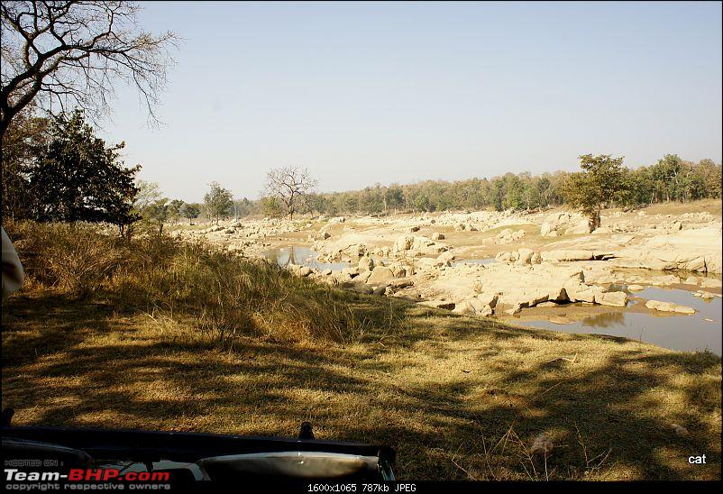 """Reflections on Wildlife Addictions """"Pench and Kanha National Park""""-127.jpg"""
