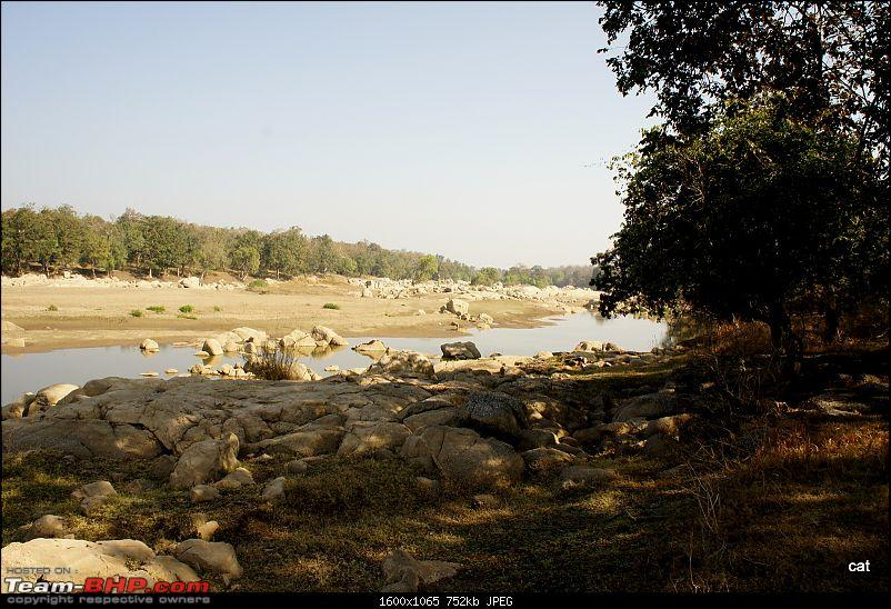 """Reflections on Wildlife Addictions """"Pench and Kanha National Park""""-128.jpg"""