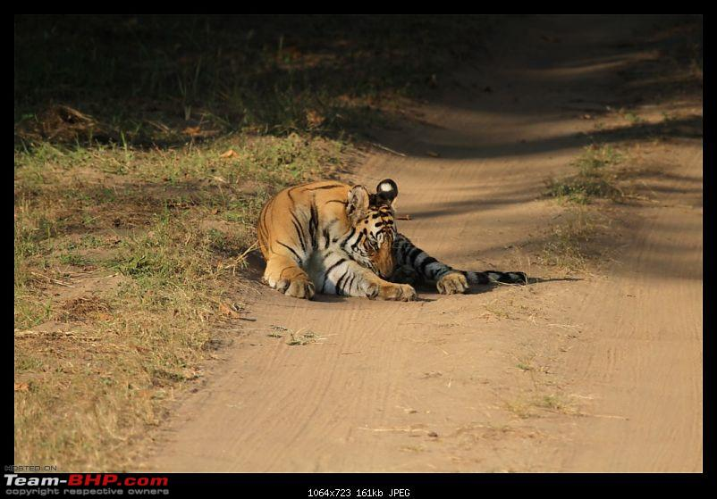 Trailing the Big Cat at Bandhavgarh-210-1024x768.jpg
