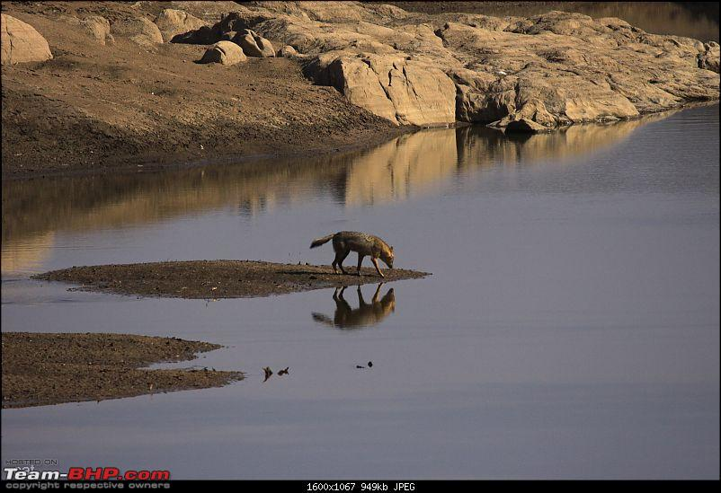 """Reflections on Wildlife Addictions """"Pench and Kanha National Park""""-131.jpg"""